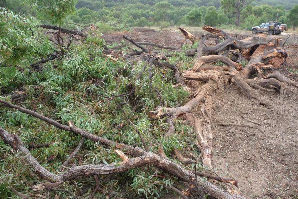 Ulan-Mulching-Tree-(2)